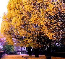 Golden Fall New Beginnings II by ishelbyme