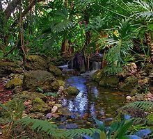 Tropical Oasis by Tomas Abreu
