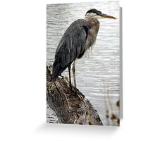 Great Blue Heron With Tongue (Full Body View) Greeting Card