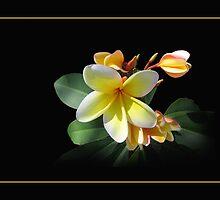Aloha by Ginny Schmidt