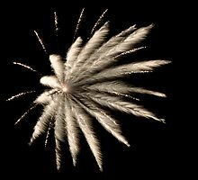 Feathered Fireworks by Jane Brack