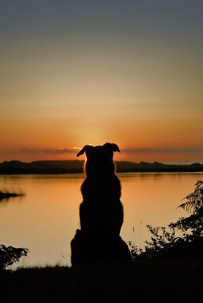 Sunset Watch by Randall Scholten