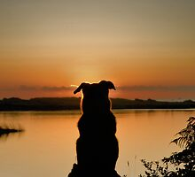Sunset Watch by Randall Scholten