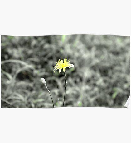 Yellow Poster