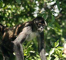 Monkey by BLAMB