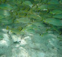 Fishies by BLAMB