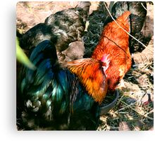 Fowl huddle Canvas Print
