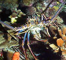 Caribbean Reef Lobster   by Amy McDaniel