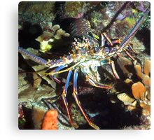 Caribbean Reef Lobster   Canvas Print