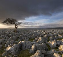 Wharfedale's Evening Sun by SteveMG