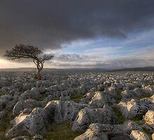 Wharfedale's Evening Sun by SteveMG