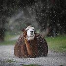 Winter Coat by Ralph  Meznar