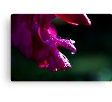 Rays on drops Canvas Print