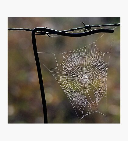 Web. Photographic Print