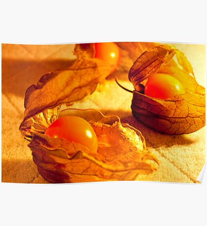Fruit in a Basket: Physalis Fruit Poster