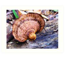 Fungi creation Art Print