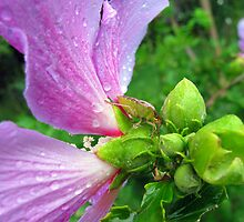 stinkbug, pretty flower by tomcat2170
