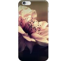 Cherry Blossom On A Table Top iPhone Case/Skin