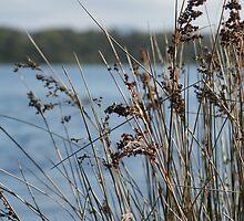 Grass - Blackalls Park by Rochelle Buckley