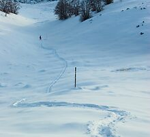 A path in the snow by Ivan Coric