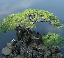 Lonely Little Bonsai by neisan79