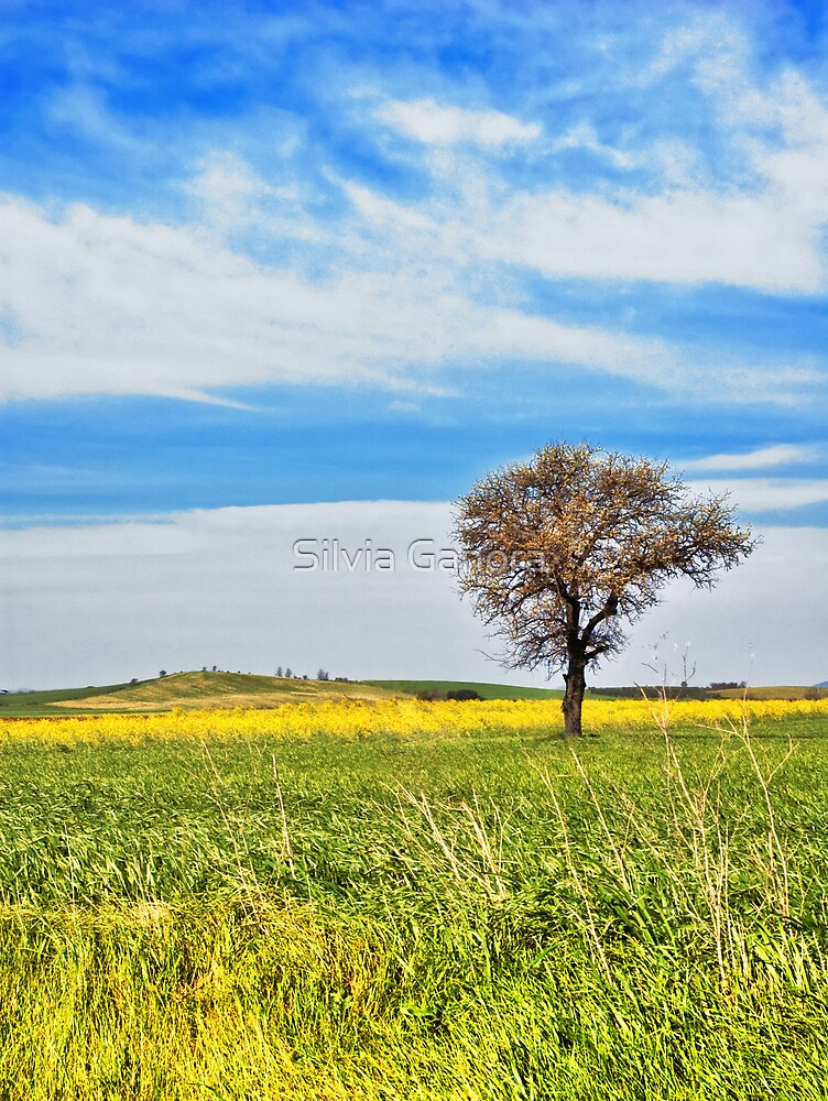 Yellow field with tree by Silvia Ganora