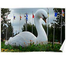 Swan River's Swan Poster