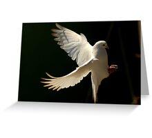 Dove Landing Greeting Card