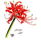 Spider Lily by robertsloan2