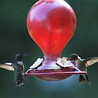 Male & Female Hummer by Rick  Friedle