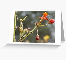 Ragged Beauty Greeting Card