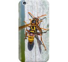 Australian Paper Wasp iPhone Case/Skin