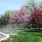 Watering Trees by Linda Miller Gesualdo