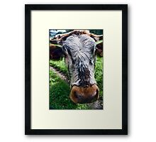 Nosey Cow Framed Print