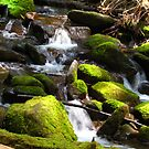 Sol Duc Falls in the Spring by karolina