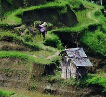 Going Home-Rice terraces, Bali by mypic
