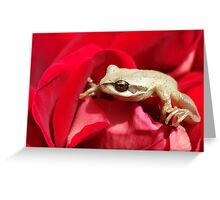 Frog in red Greeting Card