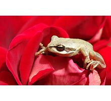 Frog in red Photographic Print