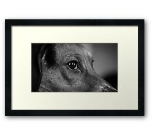 Courage the Beagle B&W Portrait - 1 Framed Print
