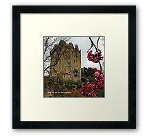 Ireland - Blarney Blossom Framed Print