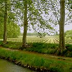 Canal du Midi by triciamary
