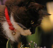 Tussi sniffing flowers by vanStaffs