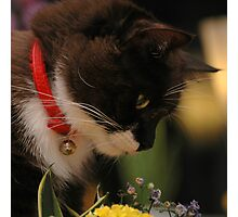 Tussi sniffing flowers Photographic Print