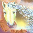 horse by lynseyl