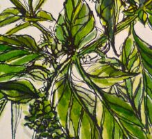 Basil. A pungent and delicious herb. Pen & wash. 21cmx28cm 2012Ⓒ Sticker