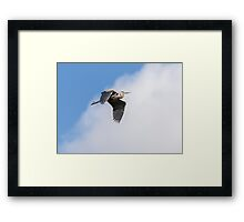 Great Blue Heron In Flight 2015-3 Framed Print