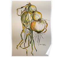 Drying onions. Tuscany. Poster