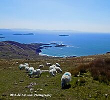 Ireland - Ring of Kerry Sheep by jezebel521