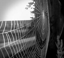 spider web by Dan Sacher
