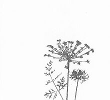 Wild Carrot Botanical by bluespecsstudio
